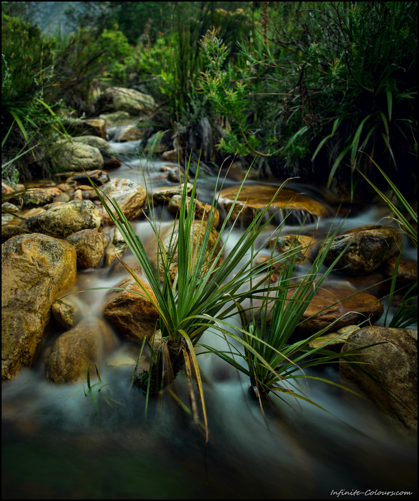 Small stream in the Tsitsikamma Mountains