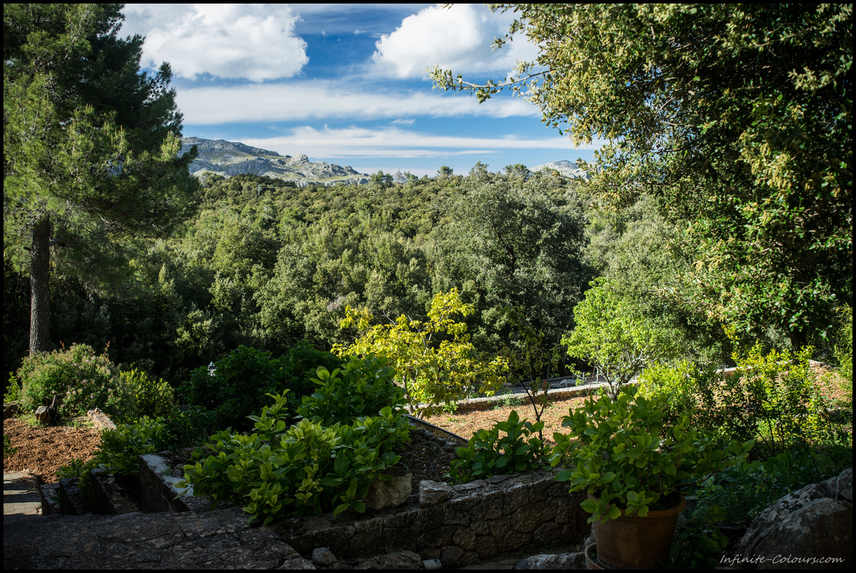 Finca view overlooking the Serra de Tramuntana forest