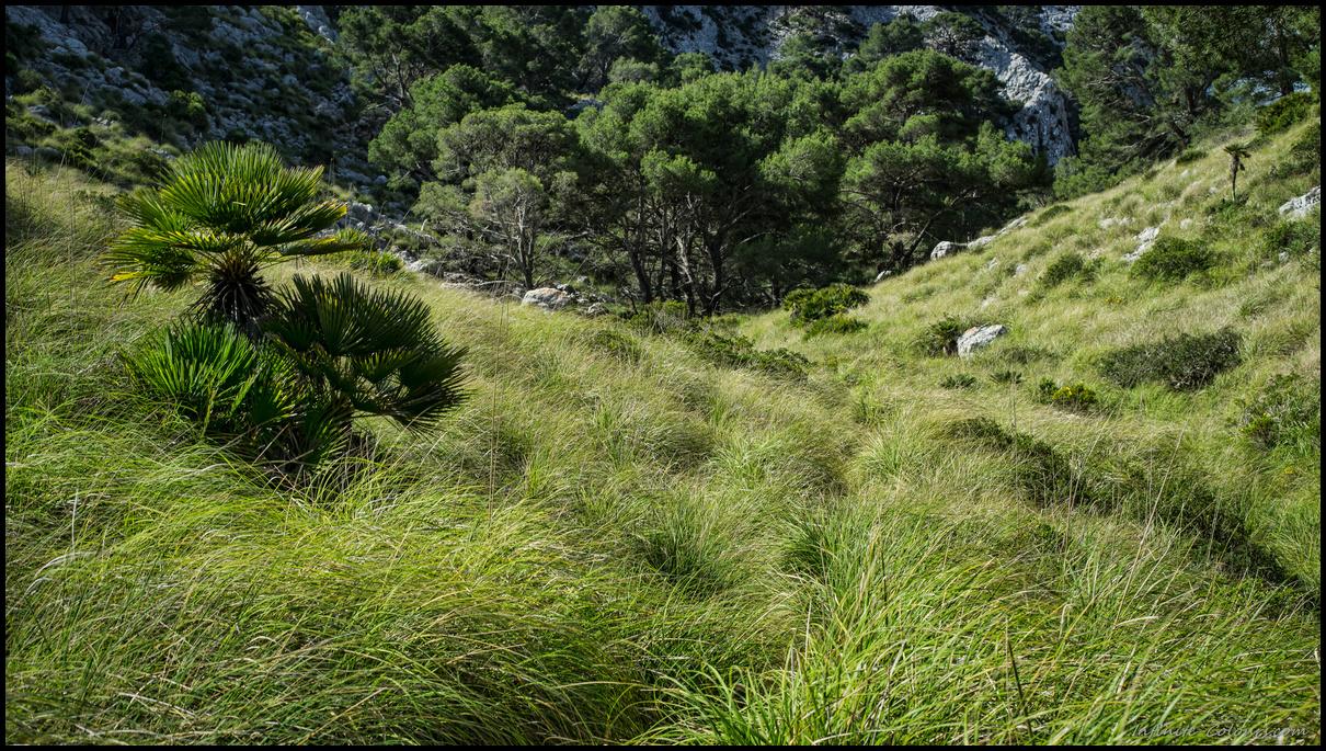 Hiking path on Formentor to Cala Murta / Cala en Gossalba