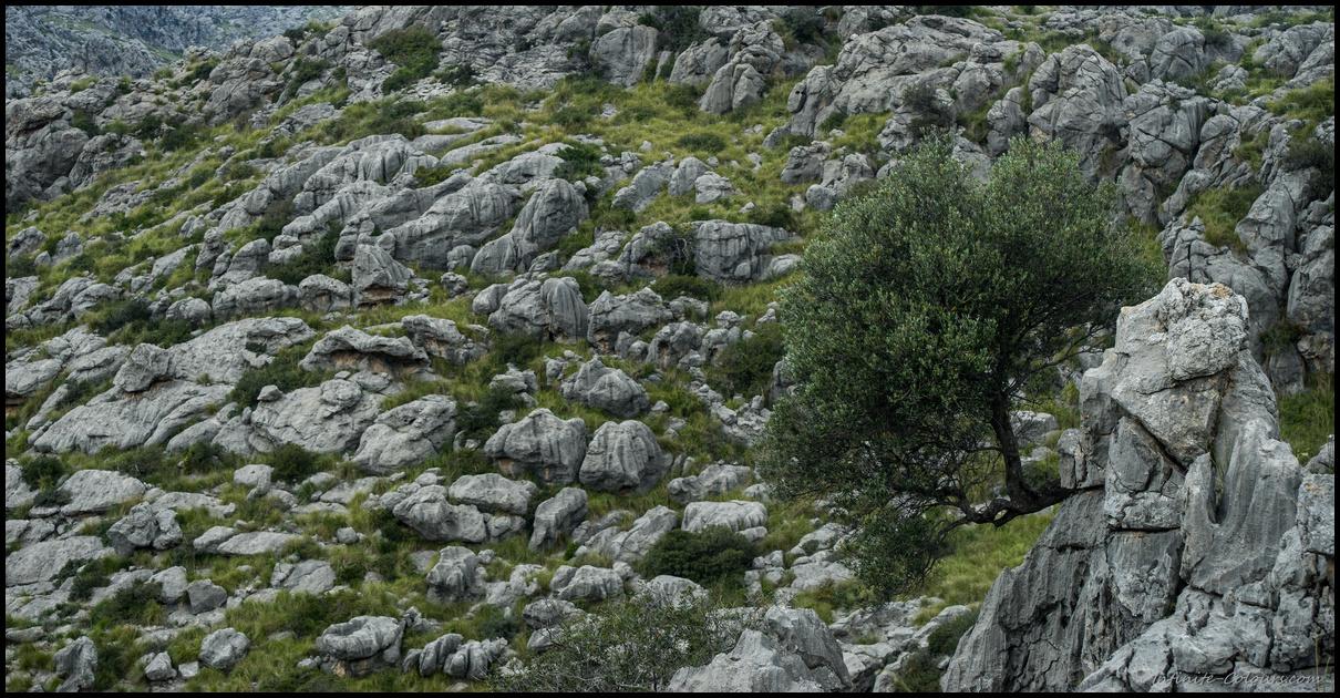 Torrent Fondo de Mortitx scenery, Tramuntana