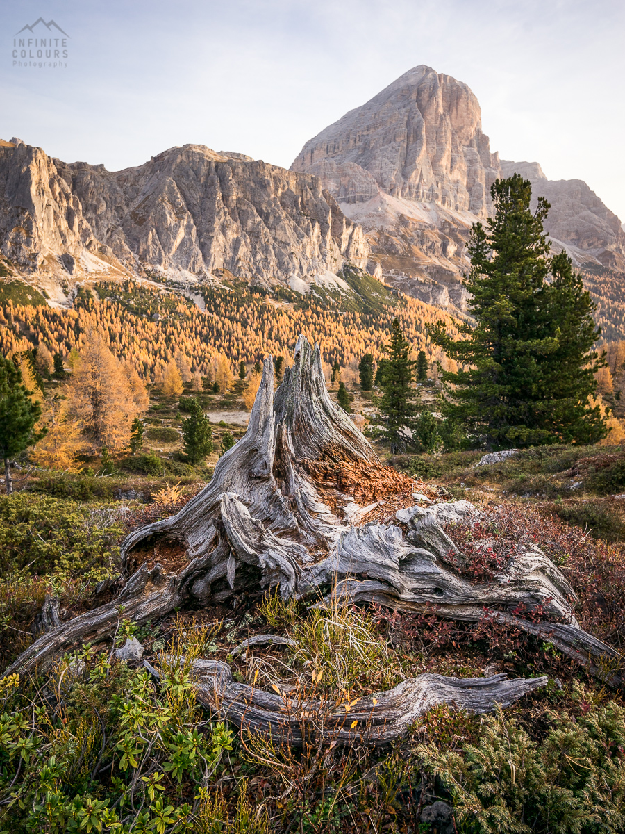 Old tree in mountains landscape photography sunrise