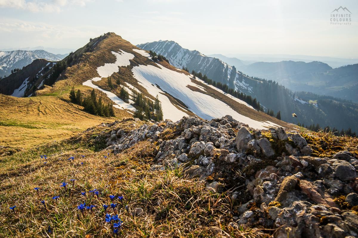 Stuiben Frühling Sonnenuntergang Immenstadt Wanderung Allgäu Landschaftsfotografie blauer Enzian Allgäuer Alpen Sederer Stuiben Buralpkopf Wanderung