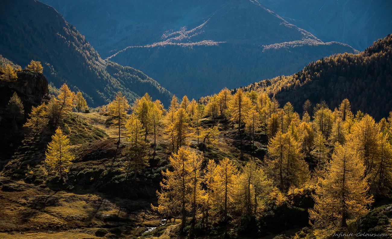Berninapass Poschiavo Herbst Goldene Laerchen golden larches autumn alpine switzerland