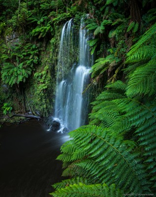 Beauchamp-australia-vicoria-landscape-photography-rainforest