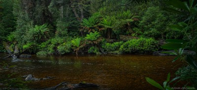 Styx River scene, North Styx Forest Reserve Mount Field area, Tasmania, Australia