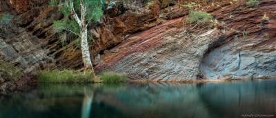 Hamersley Gorge ghost gum Hamersley Gorge, Karijini NP, Western Australia