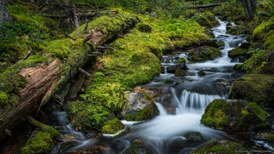 Sony A7 Minolta MD 35-75 3.5 macro Yoho temperate rainforest stream Opabin Plateau, Lake O'Hara Canada rainforest photography fotografie