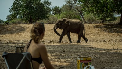 Breakfast with elephants, Nyamepi campsite Mana Pools National Park, Zimbabwe