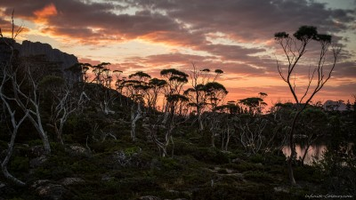 Elysia Eucalypts Sony A7 Minolta MD 35-70 3.5 macro Sunset at Lake Elysia in the Labyrinth, part of Tassie's famous Cradle Mountain nationalpark