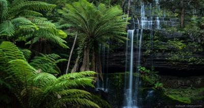 Fern Tree Paradise Tasmania landscape photography Sony A7 Minolta MD 35-70 3.5 macro Russell Falls, Mount Field National Park