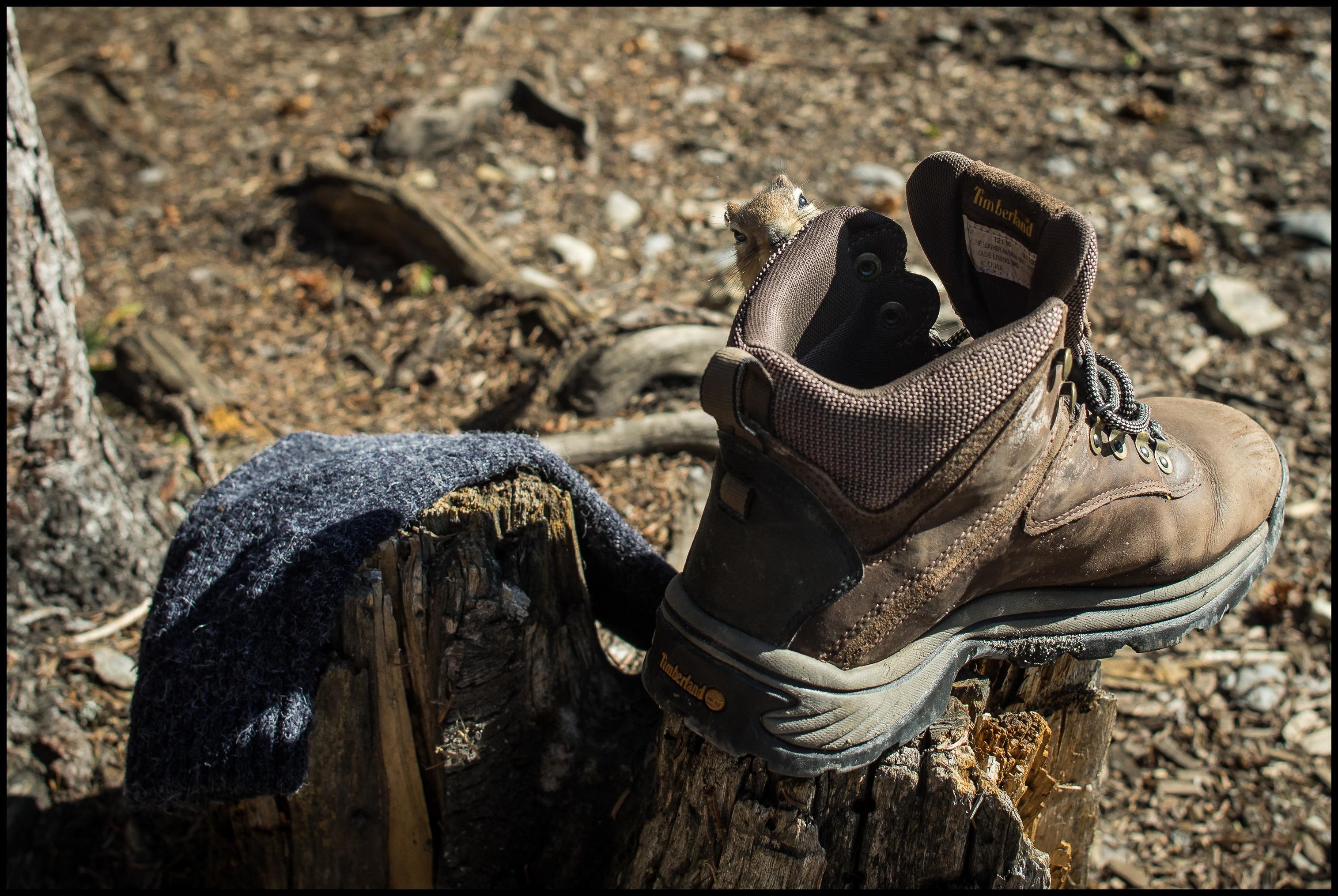 Ground squirrel salt lick, Berg Lake / Marmot campsite Sony A7 / Canon FD Tilt Shift 35 2.8