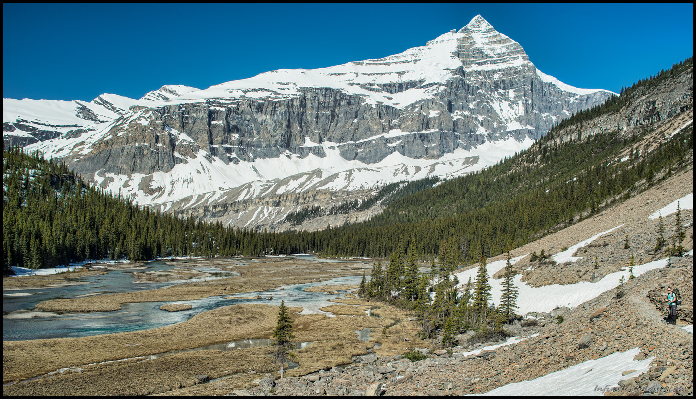 Berg Lake track, beautiful valley looking at the apptly named Whitehorn mountain