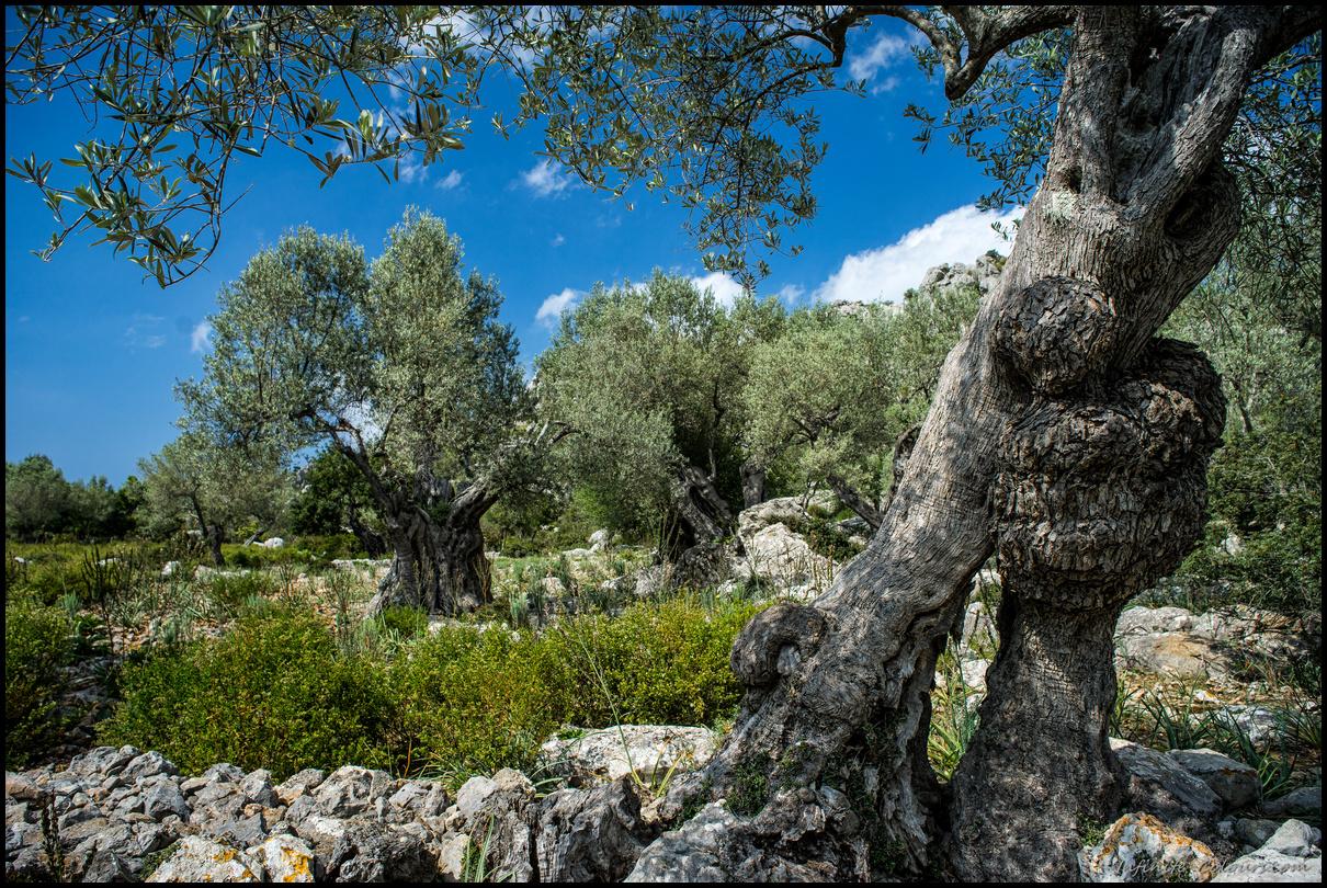 Scenery around Vinyes Mortitx, Tramuntana, Mallorca