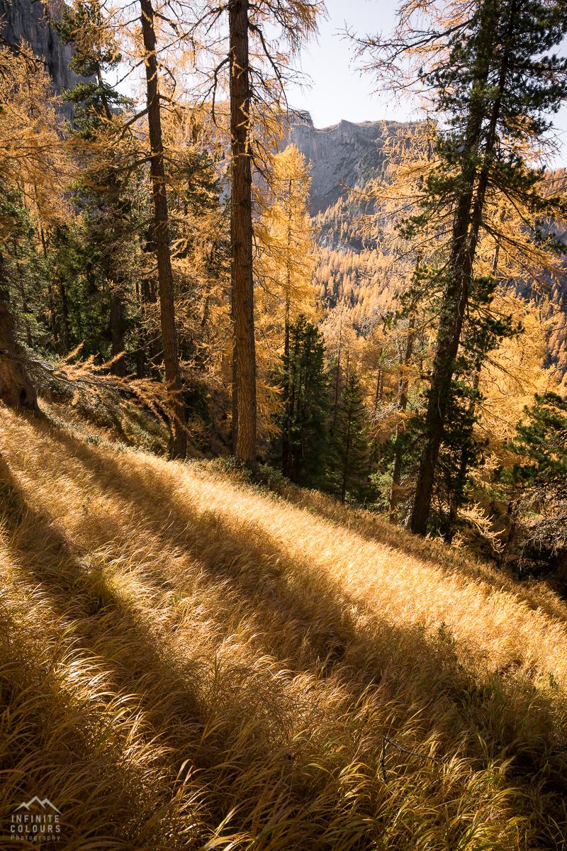 Goldener Herbst Berge Lärchen magischer Wald goldenes Gras