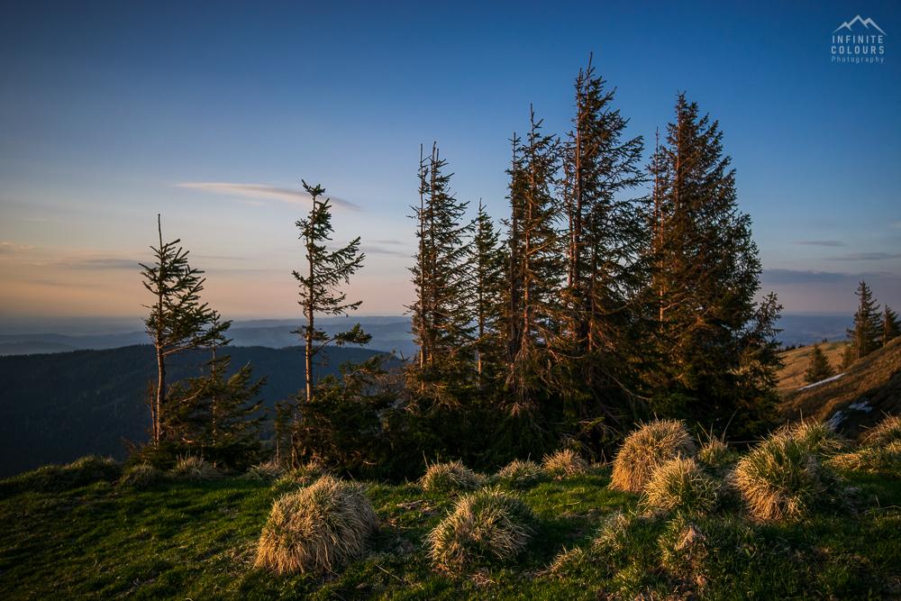 Allgäu uralte Fichten Baumbestand Oberallgäu Unterallgäu Naturschutzgebiet Nagelfluhkette Immenstadt Oberstaufen