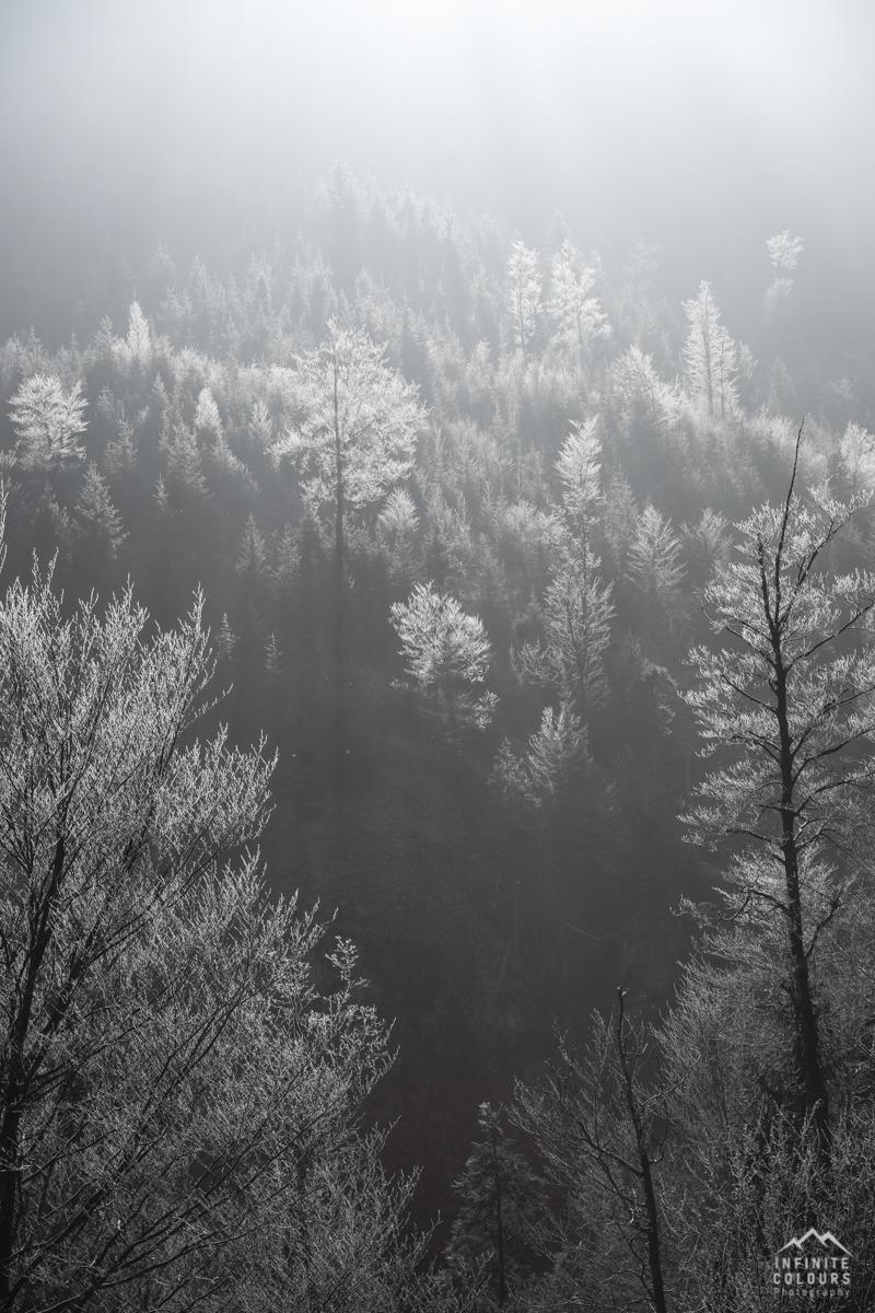 Retterschwanger Tal Retterschwangertal Mountainbike Oberstdorf Allgäu Sonnenaufgang Winter Herbst gefrorene Bäume Bad Hindelang Hinterstein Landschaftsfotografie