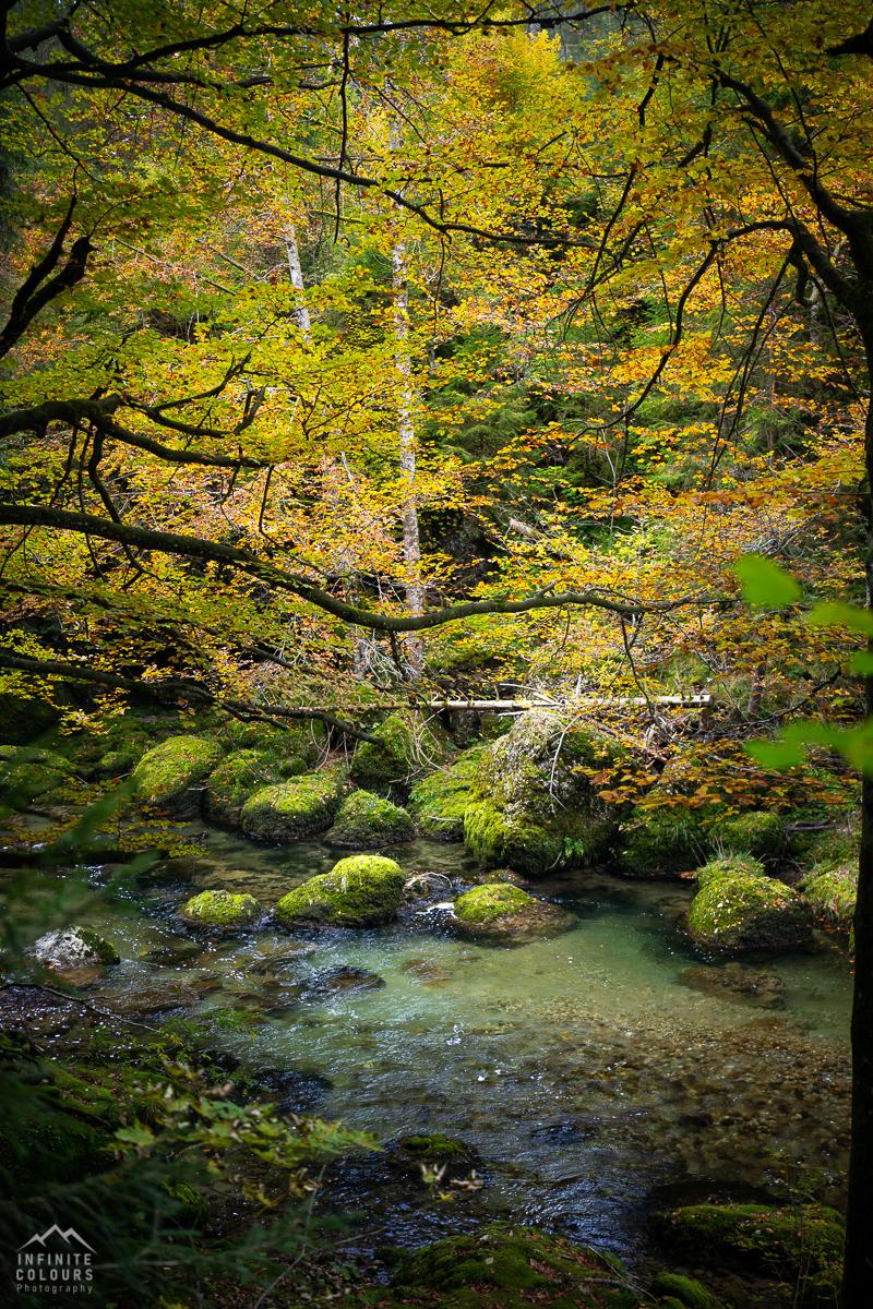 Intimate Landscape Germany Deutschland Herbst Landschaftsfotografie Deutschland Allgäu Bayern Flusslandschaft