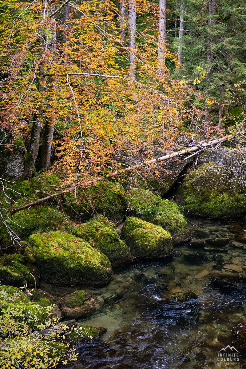 Intimite Landscape Germany Deutschland Herbst Landschaftsfotografie Deutschland Allgäu Bayern Flusslandschaft