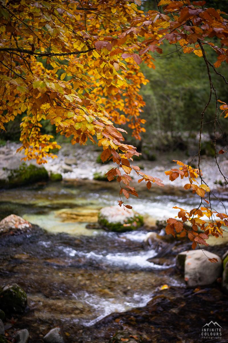 Buche Herbst Herbstfarben Deutscher Herbst Herbst Fluss Landschaftsfotografie Deutschland