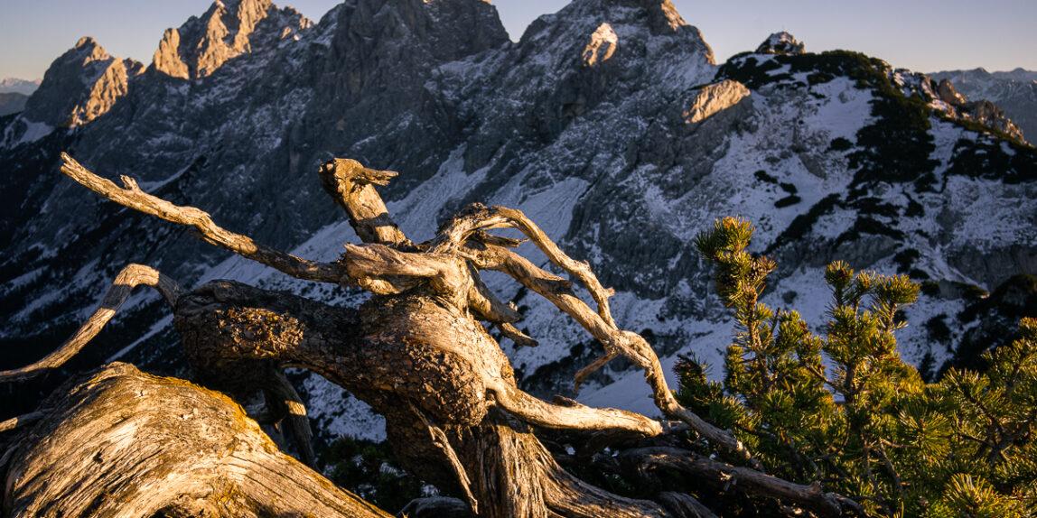Latschenkiefer Landschaftsfotografie Tannheimer Tal Gimpel Sonnenuntergang Rote Flüh Schartschrofen Klettersteig Pfronten Wanderung