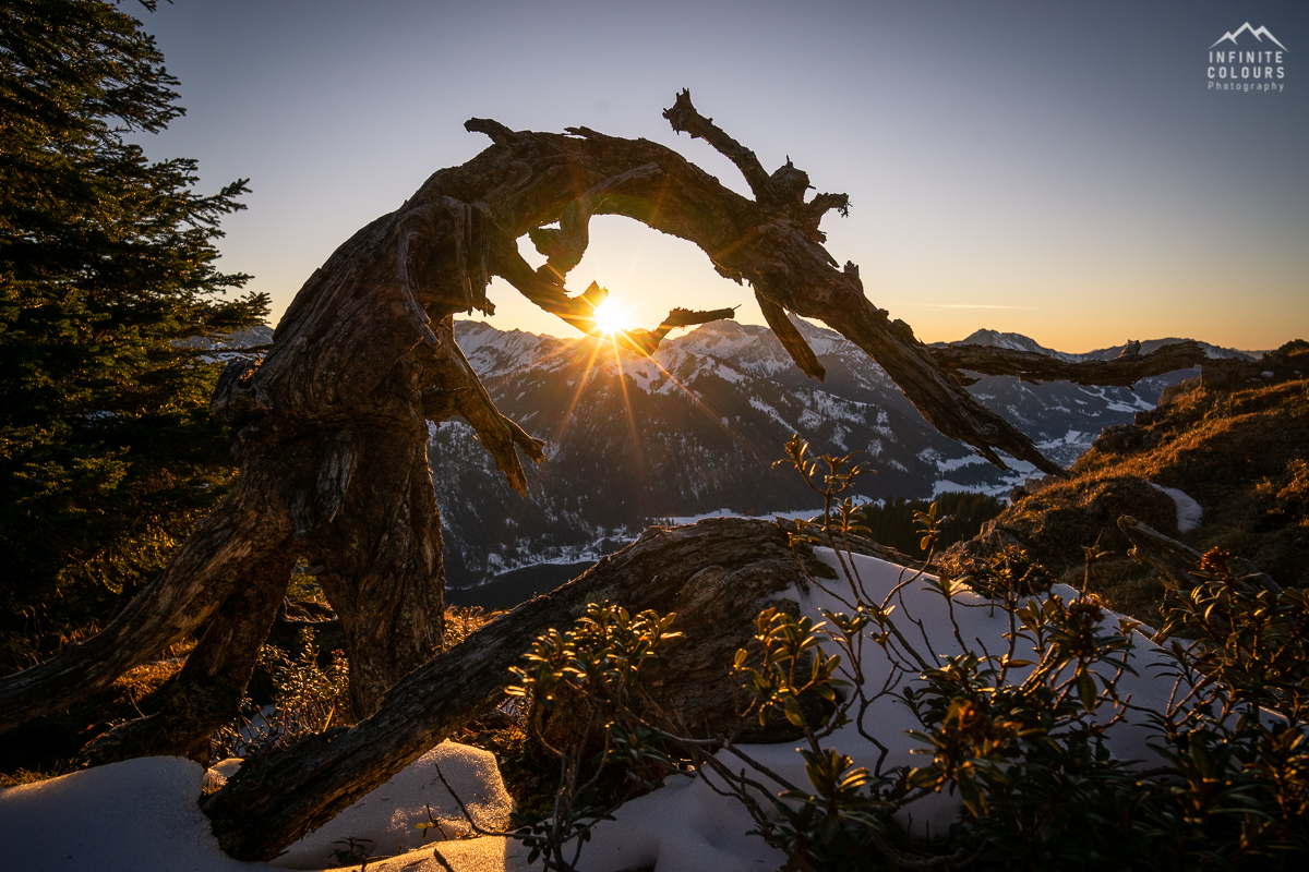 Baumwesen Latschenkiefer Landschaftsfotografie Tannheimer Tal Gimpel Sonnenuntergang Rote Flüh Schartschrofen Klettersteig Pfronten Wanderung