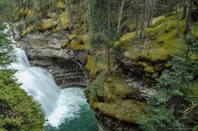 Sony A7 Canon FD TS 35 2.8 Johnston Creek moss forestBanff National Park, Canada photography fotografie