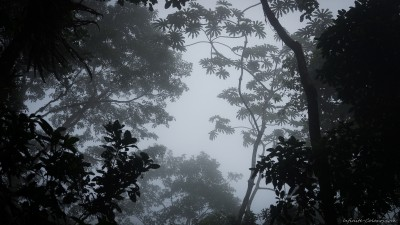 Cloud Forest at Espino Blanco, Turrialba Costa Rica
