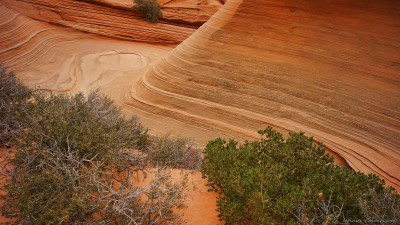 Coyote Buttes South navajo sandstone waveParia Plateau, Utah