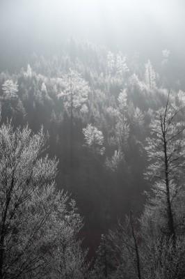 Oberstdorf-Allgäu-Winter-Winter-Wonderland-Winterwonderland-Landschaft-surreal