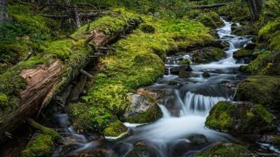Sony A7 Minolta MD 35-75 3.5 macro Yoho temperate rainforest stream Opabin Plateau, Lake O'Hara Canada rainforest photography fotografie