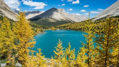 Myosotis Lake of Skoki Lakes yellow larchesBanff National Park, Canada photography fotografie Sony A7 Minolta MD 35-70 3.5 macro