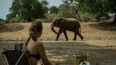 Breakfast with elephants, Nyamepi campsite Mana Pools National Park, Zimbabwe