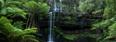 Giant fern trees loom over the lowest cascade of Russell Falls, Mount Field National Park